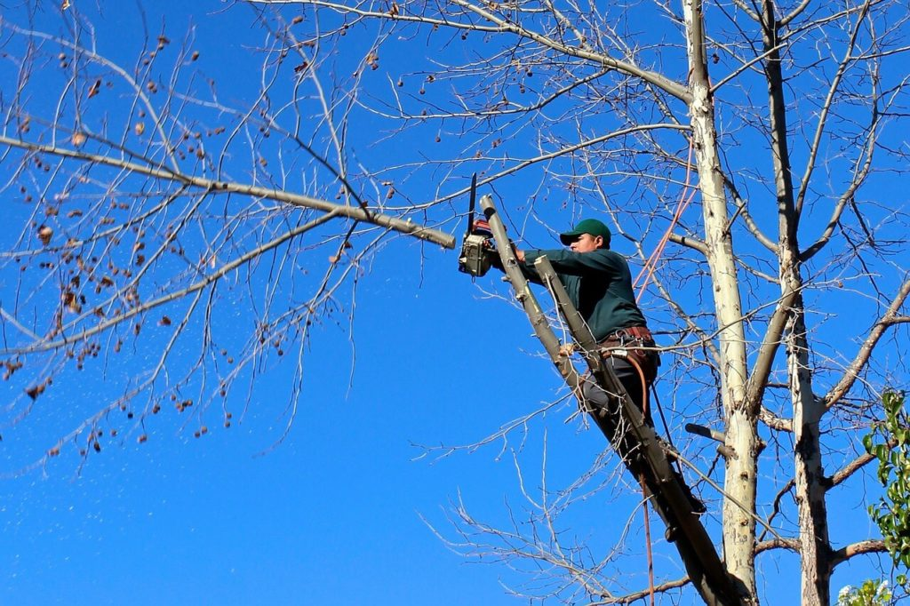 Contact Us-Sweetwater FL Tree Trimming and Stump Grinding Services-We Offer Tree Trimming Services, Tree Removal, Tree Pruning, Tree Cutting, Residential and Commercial Tree Trimming Services, Storm Damage, Emergency Tree Removal, Land Clearing, Tree Companies, Tree Care Service, Stump Grinding, and we're the Best Tree Trimming Company Near You Guaranteed!