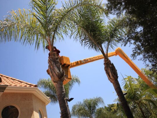 Palm Tree Trimming-Sweetwater FL Tree Trimming and Stump Grinding Services-We Offer Tree Trimming Services, Tree Removal, Tree Pruning, Tree Cutting, Residential and Commercial Tree Trimming Services, Storm Damage, Emergency Tree Removal, Land Clearing, Tree Companies, Tree Care Service, Stump Grinding, and we're the Best Tree Trimming Company Near You Guaranteed!