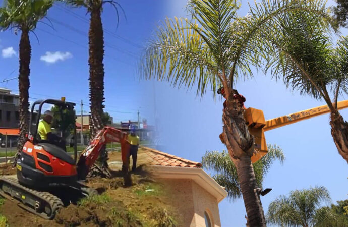 Palm tree trimming & palm tree removal-Sweetwater FL Tree Trimming and Stump Grinding Services-We Offer Tree Trimming Services, Tree Removal, Tree Pruning, Tree Cutting, Residential and Commercial Tree Trimming Services, Storm Damage, Emergency Tree Removal, Land Clearing, Tree Companies, Tree Care Service, Stump Grinding, and we're the Best Tree Trimming Company Near You Guaranteed!