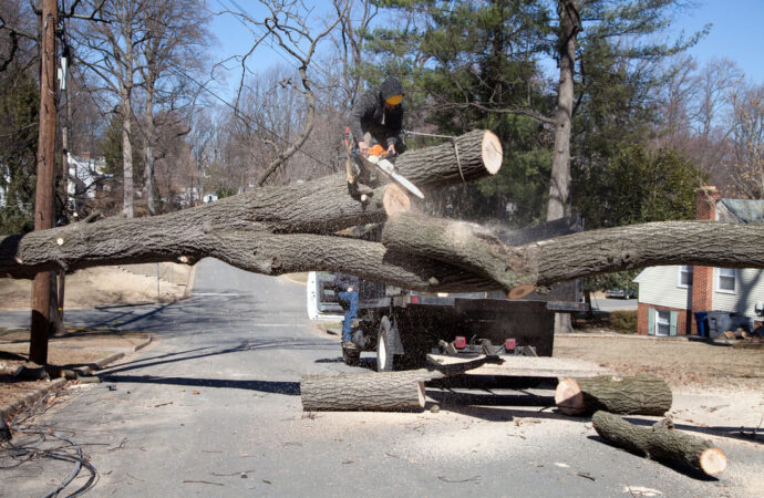 Residential Tree Services-Sweetwater FL Tree Trimming and Stump Grinding Services-We Offer Tree Trimming Services, Tree Removal, Tree Pruning, Tree Cutting, Residential and Commercial Tree Trimming Services, Storm Damage, Emergency Tree Removal, Land Clearing, Tree Companies, Tree Care Service, Stump Grinding, and we're the Best Tree Trimming Company Near You Guaranteed!