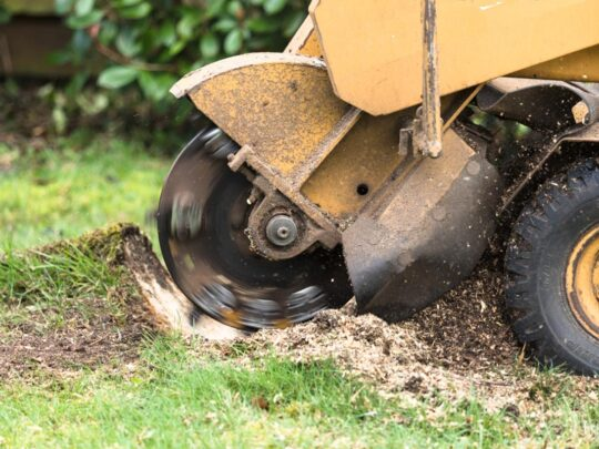 Stump Grinding-Sweetwater FL Tree Trimming and Stump Grinding Services-We Offer Tree Trimming Services, Tree Removal, Tree Pruning, Tree Cutting, Residential and Commercial Tree Trimming Services, Storm Damage, Emergency Tree Removal, Land Clearing, Tree Companies, Tree Care Service, Stump Grinding, and we're the Best Tree Trimming Company Near You Guaranteed!