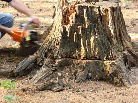 Stump Removal-Sweetwater FL Tree Trimming and Stump Grinding Services-We Offer Tree Trimming Services, Tree Removal, Tree Pruning, Tree Cutting, Residential and Commercial Tree Trimming Services, Storm Damage, Emergency Tree Removal, Land Clearing, Tree Companies, Tree Care Service, Stump Grinding, and we're the Best Tree Trimming Company Near You Guaranteed!