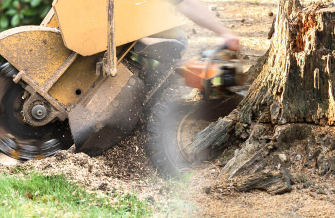 Stump grinding & removal-Sweetwater FL Tree Trimming and Stump Grinding Services-We Offer Tree Trimming Services, Tree Removal, Tree Pruning, Tree Cutting, Residential and Commercial Tree Trimming Services, Storm Damage, Emergency Tree Removal, Land Clearing, Tree Companies, Tree Care Service, Stump Grinding, and we're the Best Tree Trimming Company Near You Guaranteed!