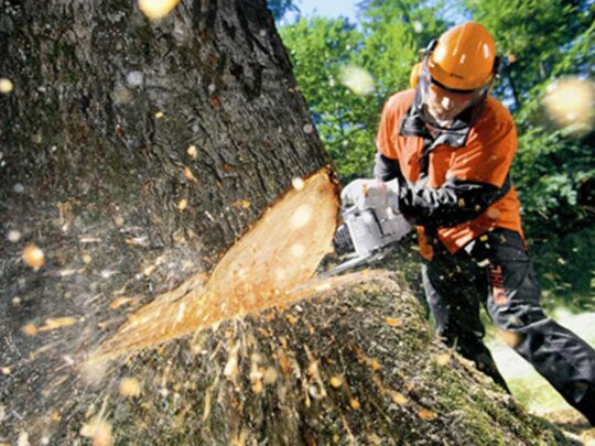 Tree Cutting-Sweetwater FL Tree Trimming and Stump Grinding Services-We Offer Tree Trimming Services, Tree Removal, Tree Pruning, Tree Cutting, Residential and Commercial Tree Trimming Services, Storm Damage, Emergency Tree Removal, Land Clearing, Tree Companies, Tree Care Service, Stump Grinding, and we're the Best Tree Trimming Company Near You Guaranteed!