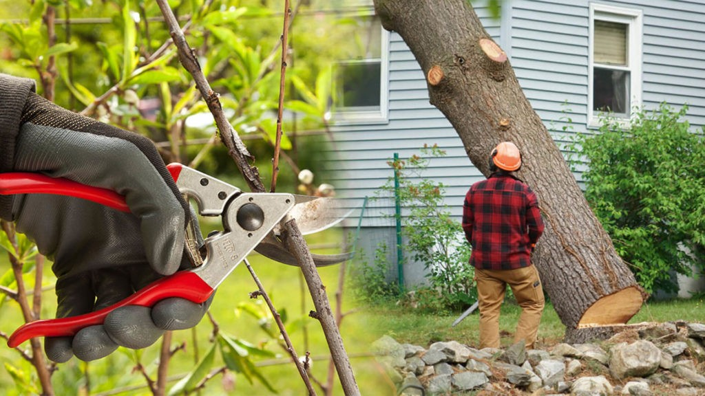 Tree pruning & tree removal-Sweetwater FL Tree Trimming and Stump Grinding Services-We Offer Tree Trimming Services, Tree Removal, Tree Pruning, Tree Cutting, Residential and Commercial Tree Trimming Services, Storm Damage, Emergency Tree Removal, Land Clearing, Tree Companies, Tree Care Service, Stump Grinding, and we're the Best Tree Trimming Company Near You Guaranteed!